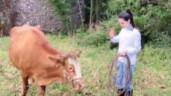 'Tiểu Long Nữ' Lý Nhược Đồng gây sốt với video chăn bò, lùa vịt